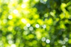 Fondo verde vago della foglia dell'albero con bokeh, struttura della natura fotografie stock
