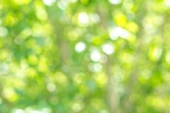 Fondo verde vago della foglia dell'albero con bokeh, struttura della natura Fotografia Stock Libera da Diritti