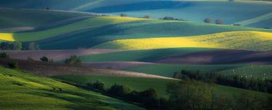 Fondo verde y gris del extracto del campo de la primavera imagen de archivo