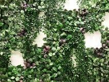 Fondo verde y púrpura artificial hermoso de la pared de la planta y foto de archivo libre de regalías