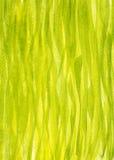 Fondo vertical de la hierba de la primavera pintado con aguazo Fotografía de archivo