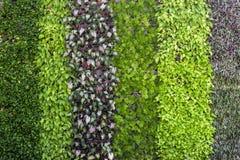 Fondo vertical del jardín Imagen de archivo libre de regalías