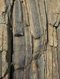 Fondo verticale della roccia Fotografie Stock Libere da Diritti