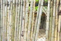 Fondo verticale di bambù del primo piano Fotografia Stock