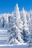 Fondo vibrante de las vacaciones del invierno con los árboles de pino cubiertos por las nevadas fuertes Foto de archivo libre de regalías