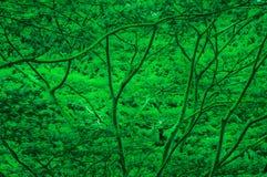 Fondo vibrante del árbol Imagen de archivo