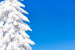 Fondo vibrante di vacanza di inverno con il pino coperto da forte nevicata e da cielo blu Fotografia Stock Libera da Diritti