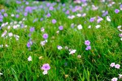 Fondo violeta hermoso de la falta de definición de la flor con el espacio de la copia fotos de archivo