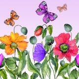 Fondo vivo di estate Bei fiori del papavero e farfalle variopinti di volo su fondo lilla Forma quadrata Fotografie Stock Libere da Diritti