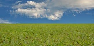 Fondo y cielo de la textura de la hierba verde Foto de archivo