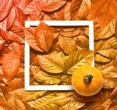 Fondo y marco amarillos hermosos de las hojas de otoño con la calabaza imágenes de archivo libres de regalías