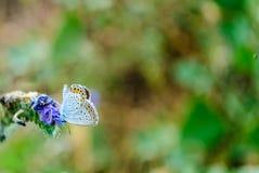 Fondo y mariposa borrosos Fotos de archivo