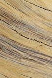 Fondo y textura - colores de la madera dura del detalle y de contornos Foto de archivo
