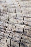 Fondo y textura de madera - contornos, líneas y curvas duros Imagen de archivo libre de regalías