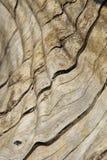 Fondo y textura de madera - curva, contornos y color Fotos de archivo libres de regalías