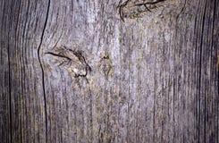 Fondo y textura del viejo tablero de madera Foto de archivo libre de regalías