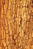 Fondo y textura - grietas de oro de la madera dura de contornos y del color Fotos de archivo
