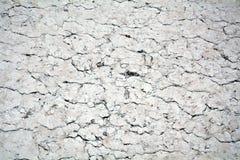 Fondo y textura secos del extracto del mármol del cemento Imagenes de archivo