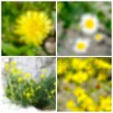Fondos borrosos florales ilustración del vector