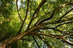 Fondos de árboles Imágenes de archivo libres de regalías