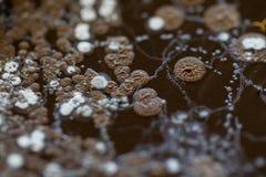 Fondos de caracter?sticas y de diversa colonia formada de bacterias y molde que crece en las placas de agar imagenes de archivo