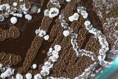 Fondos de caracter?sticas y de diversa colonia formada de bacterias y molde que crece en las placas de agar fotografía de archivo