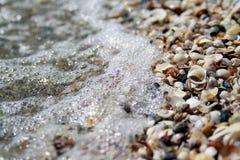 Fondos de la concha marina y de la onda Foto de archivo