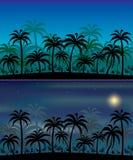Fondos de la selva ilustración del vector