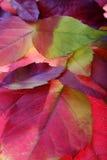 Fondos de las hojas de otoño Imagen de archivo libre de regalías