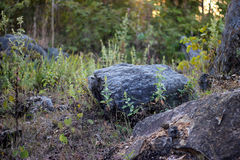 Fondos del bosque de la colina del risco imagen de archivo libre de regalías
