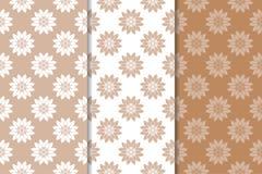 Fondos florales de Brown Conjunto de modelos inconsútiles Imagenes de archivo