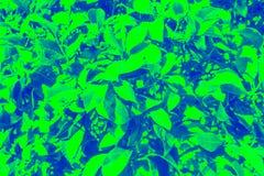 Fondos hermosos de las plantas fotografía de archivo libre de regalías