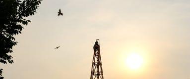 2017 fondos Sun del cielo de la puesta del sol de los pájaros de la hoja de Climb Tree Plant del conductor de pila de las persona fotografía de archivo libre de regalías