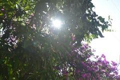 Fondos 035 - The Sun mira con alta imagen superior de la acción del árbol Imagenes de archivo
