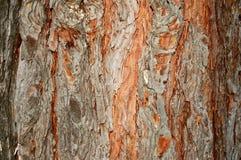 Fondos textured naturaleza Fotos de archivo