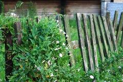 Fondos verdes Imagen de archivo libre de regalías