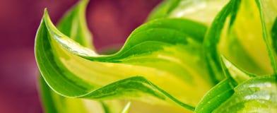 Fondos verdes abstractos de la hoja Imagen de archivo