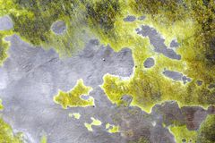 Fondos verdes claros como continentes Imagenes de archivo