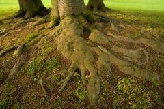 Fonds d'arbre image libre de droits
