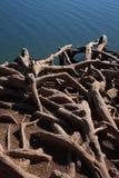 Fonds d'arbre par l'eau Image stock