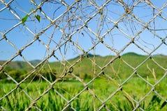 Fonds d'arbre sur le fil de bavure Images libres de droits