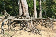 Fonds de l'arbre images libres de droits
