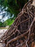 Fonds de l'arbre Photos stock