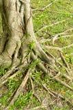 Fonds de l'arbre Image libre de droits