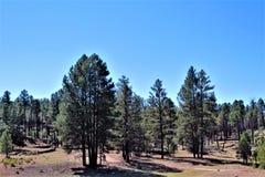Fonds de tour de rassemblement de liberté du courrier 86 de légion américaine - éleveur en Arizona du nord, Etats-Unis photo libre de droits