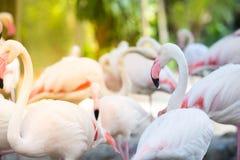 Fonds naturels de flamant Photographie stock libre de droits