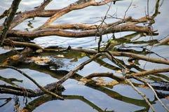 Fonds se reflétants d'arbre photographie stock libre de droits