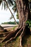 Fonds tropicaux d'arbre Photographie stock