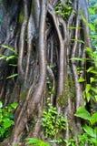 Fonds tropicaux d'arbre. Image libre de droits