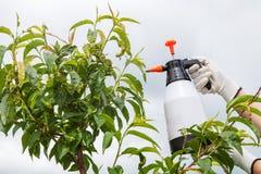 Fongicide de pulvérisation d'arbre fruitier de feuilles images libres de droits